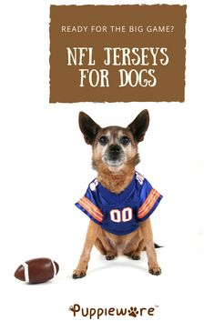 Looking for NFL jerseys for dogs in time for the big game? We can help both Eagles' and Patriots' fans. Sports Team Apparel, Hound Dog Breeds, Cute Dog Clothes, Beagle Dog, Dachshund, Corgi, Dog Games, Animal Birthday, Football Jerseys