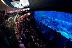 Aquarium Tank at the Dubai Mall, UAE {Traveling across the Middle East} #bucketlist