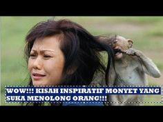 Kisah Inspiratif Monyet Yang Suka Menolong Tanpa Pamrih - DITANTANG