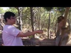 Asi nos saludan los monos del Gurugu en nuestra excursion de Nador