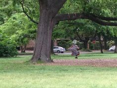 Tire swing with tree protection.