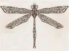 Marvelous Dragonfly Tattoo Design