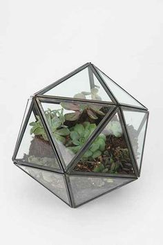 Unique planters and terrariums are something every garden will love! Hexagon Terrarium