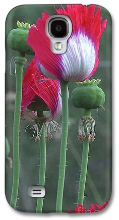 Ikkanshu japanese and jumbo turkish oval glabrum poppies rare danish flag papaver somniferum opium poppies flowers and pods galaxy s4 case for sale by organical botanicals mightylinksfo