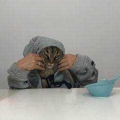 "Polubienia: 27.5 tys., komentarze: 803 – Pleasant Cats 🇹🇷 (@pleasantcats) na Instagramie: ""📹 @yves_the_cat ""Nom, nom, nom 😹😹😹"" #pleasantcats"""