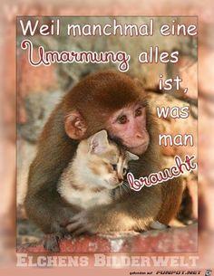 -Datei 'herzige Tierbilder.' Kommentar: herzige Tierbilder