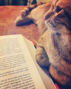 Asystent ds. Czytania. #neiraczyta  #Arseniusz #AlteredCarbon #cat #book #reading