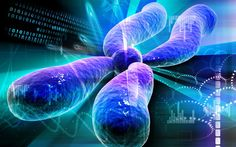 'Female' Chromosome May Leave a Mark on Male Fertility