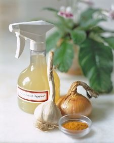 Martha Stewart Living, March 2002 Homemade, nonchemical spray to keep slugs and aphids away.   One peeled onion, two peeled garlic cloves, and one teaspoon cayenne pepper in the jar of a blender. Add three cups of water, and blend until smooth. Let the mixture sit overnight, strain the liquid into a spray bottle, and coat plants generously.