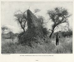 Ant Heap, Mashonaland | South Africa by The National Archives UK