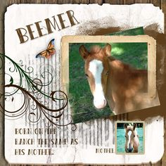 Beemer by sanra. Kit used: Artblends Just Natural http://scrapbird.com/designers-c-73/k-m-c-73_516/lora-speiser-c-73_516_512/artblends-just-natural-1-page-template-plus-p-15950.html#