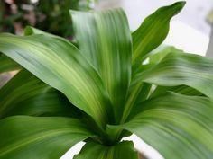 Cuidar de tus plantas de interior en invierno - http://www.jardineriaon.com/cuidar-de-tus-plantas-de-interior-en-invierno.html