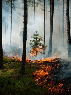 Resultado de imagen de forest in fire tumblr