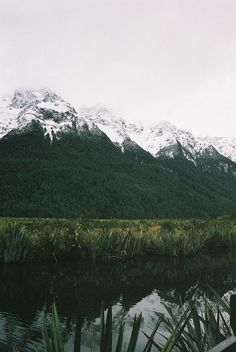 Mirror Lakes. On the trip to Milford Sound, Fiordland National Park, South Island, New Zealand.