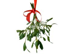 According to an old Christmas custom, a man and a woman who meet under a hanging of mistletoe were obliged to kiss. The mistletoe is still hung up in farm-houses and kitchens at Christmas, and the young men have the privilege of kissing the girls under it, plucking each time a berry from the bush. When the berries are all plucked the privilege ceases.