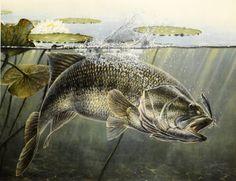 Bass Fishing Shirts, Fish Art, Water, Artwork, Painting, Fish, Hipster Stuff, Gripe Water, Work Of Art