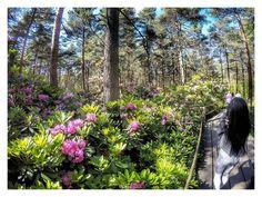 #europe  #instafinland  #helsinki  #travel  #discovernordics  #traveling  #travelgram  #finnishboy  #landscape  #landscape_lovers  #finnish  #travelphotography  #instatravel  #finland_frames  #instagramers  #visitfinland  #thisisfinland  #discoverfinland  #igscandinavia  #ig_finland  #visitfinlandjp  #luontoonfi  #finnishmoments  #lovelyfinland  #thebestoffinland  #nature  #visitfinland  #unlimitedscandinavia  #beautyofsuomi  #finland_online