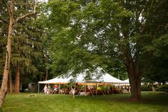 Venue & Catering : Beech Tree Cottages Photography : Jamerlyn Brown Photography Flowers & Styling : Heather Daley Beech Tree, Flower Fashion, Gazebo, Photography Flowers, Outdoor Structures, Events, Patio, Cottages, Catering