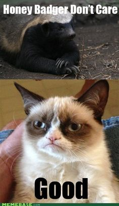 "Honey Badger don't care.  Grumpy cat, ""Good!"""