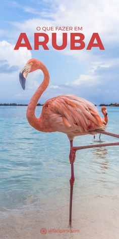 O que fazer em Aruba: atrações imperdíveis no paraíso. Praias Renaissance Island. Windsurfing, kitesurfing e snorkeling Natural Pool Philip's Animal Garden Arikok National Park Centro de Oranjestad California Lighthouse Alto Vista Chapel. Arashi Beach, Boca Catalina Beach, Hadicurari Beach, Malmok Beach, Palm Beach, Eagle Beach, Manchebo e Druif. #aruba #caribe #praias