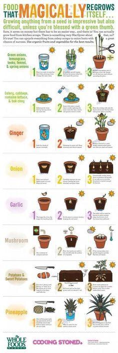 Self growing plants