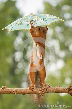 Find the Best Stock Photos Chosen by Dreamstime Editors - Page 3