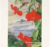 Marianne North Paintings - Bing Images