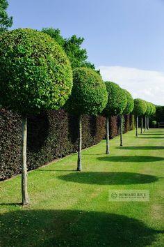 View of The Hornbeam Walk, Town Place Garden, Sussex. Howard Rice -- Garden Photography