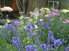 Cottage garden heading into fall (deer resistant)