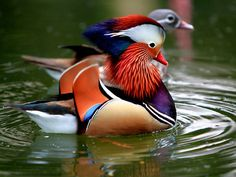 This pretty and colorful bird seems to be saying this to the onlookers which is very correct.