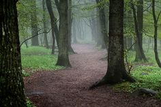 In a Scandinavian forest.