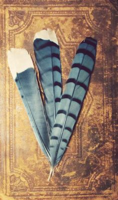 Bluejay feathers - have some of these myself