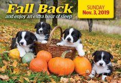 Daylight Savings Time, Fall Back, Sleep, Dogs, Animals, Outdoor, Autumn, Summer Time, Outdoors