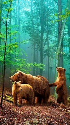 "janetmillslove: ""Brown Bear with Cubs moment love """