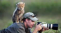 An inquisitive cheetah cub climbs onto the back of photographer Stu Porter who captured the action on the savannah.  - photo from Caters News Agency