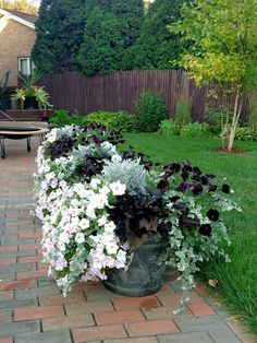 Wave Petunias, lavender and black velvet, in containers with black sweet potato vine, silver licorice and dusty miller. I hand-painted those pots last summer :) These are another @miraclegro miracle. Michigan annuals. Love!!!