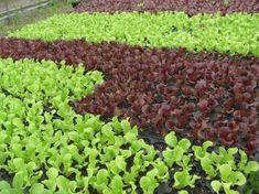 378 besten gartentipps bilder auf pinterest in 2018 garten terrasse gartenpflanzen und. Black Bedroom Furniture Sets. Home Design Ideas
