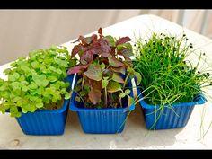 Как вырастить микрозелень. Микрозелень в домашних условиях. - YouTube