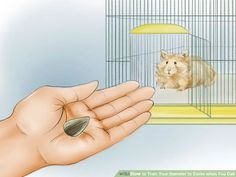 Image titled Train Your Hamster to Come when You Call Step 9