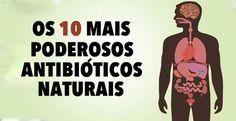 OS 10 MAIS PODEROSOS ANTIBIÓTICOS NATURAIS CONHECIDOS PELA HUMANIDADE!