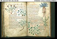 Mandragora - Female Mandrake 10th Century Herbology.