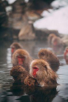 Snow Monkeys of Nagano
