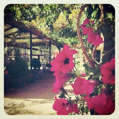 La terraza de Entrerrobles en verano #entrerrobles #camping #soria #spain