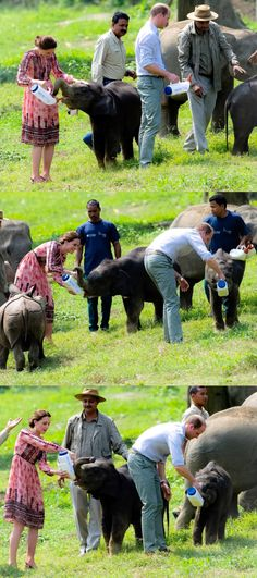 William and Kate feed baby elephants during a visit to the Centre for Wildlife Rehabilitation and Conservation, at Kaziranga National Park // April 13, 2016