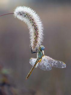 Autumn dragonfly by dralik.deviantart.com on @deviantART