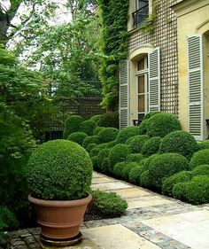 What a beautiful pathway adorned with a round topiary in a rustic planter.