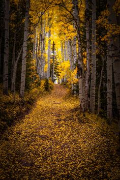 Through the Forest by Jason Hatfield on 500px