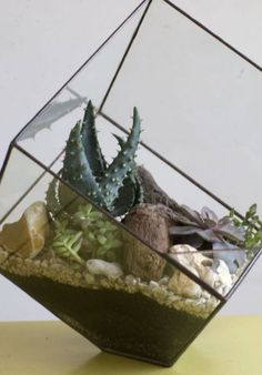 A terrarium filled with gravel and cacti, which brings to mind a desolate desert landscape. Picture: Martin Pope