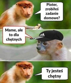 Very Funny Memes, Good Mood, Cool, Best Memes, Humor, Animales, Best Memes Ever, Hilarious Memes, Humour