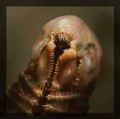 Step into the mind of Alien: Covenant concept artist Dane Hallett - Alien: Covenant & Sequel Movie News Monster Concept Art, Alien Concept Art, Creature Concept Art, Creature Design, Alien Covenant Concept Art, Arte Horror, Horror Art, Alien Creatures, Fantasy Creatures